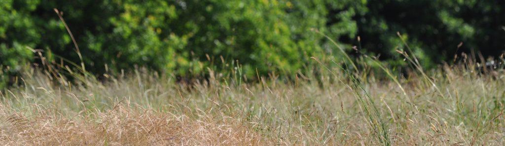 le nez dans l'erbe